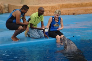 Spectators get to interact with the Dolphins