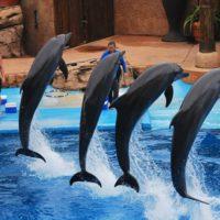 Ushaka Has a Brand New Dolphin Show