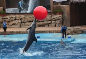 Ushaka - Dolphin show