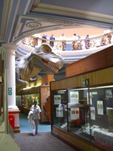 Dinosaurs - Durban Natural Science Museum