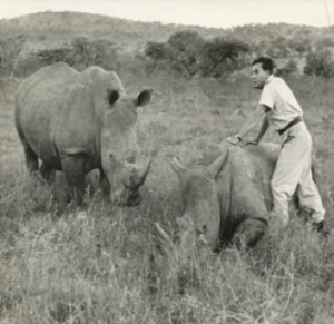 Ian Player In 1955 With A Rhino (pi