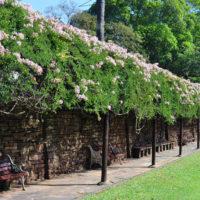 The Amazing Durban Botanical Gardens