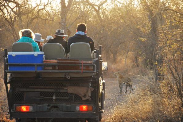 African Wild Travel