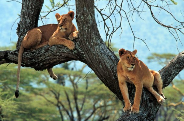 Durban Safari & Tours